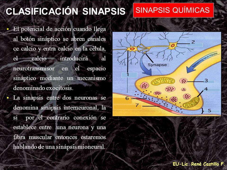 CLASIFICACIÓN SINAPSIS