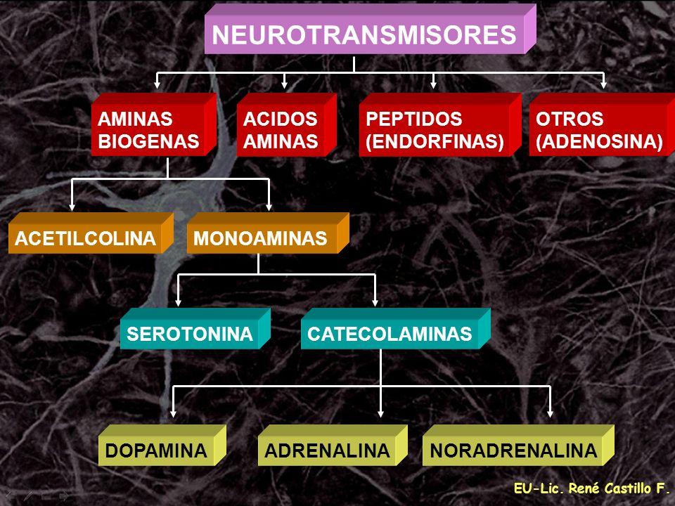 NEUROTRANSMISORES AMINAS BIOGENAS ACIDOS PEPTIDOS (ENDORFINAS) OTROS