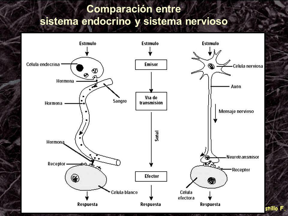 Comparación entre sistema endocrino y sistema nervioso