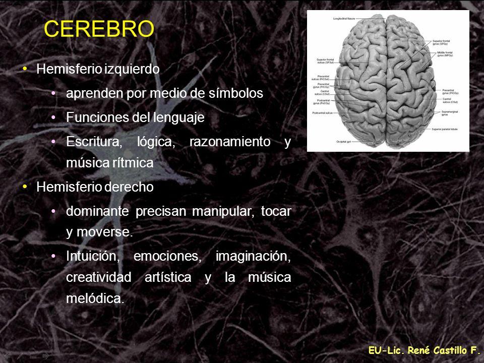 CEREBRO Hemisferio izquierdo aprenden por medio de símbolos