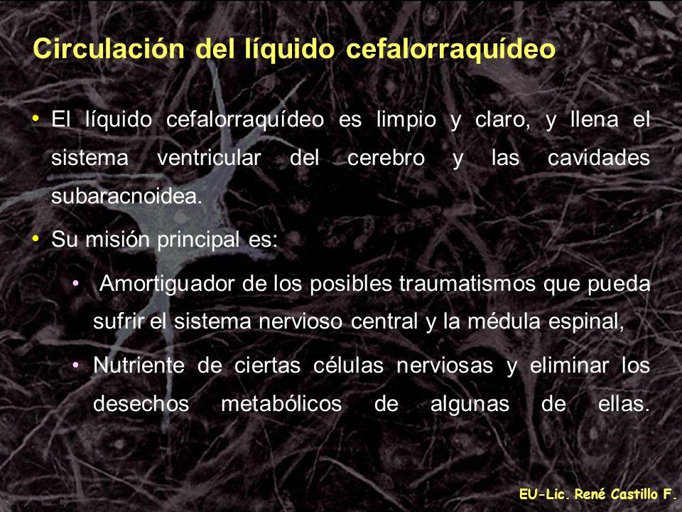 Circulación del líquido cefalorraquídeo