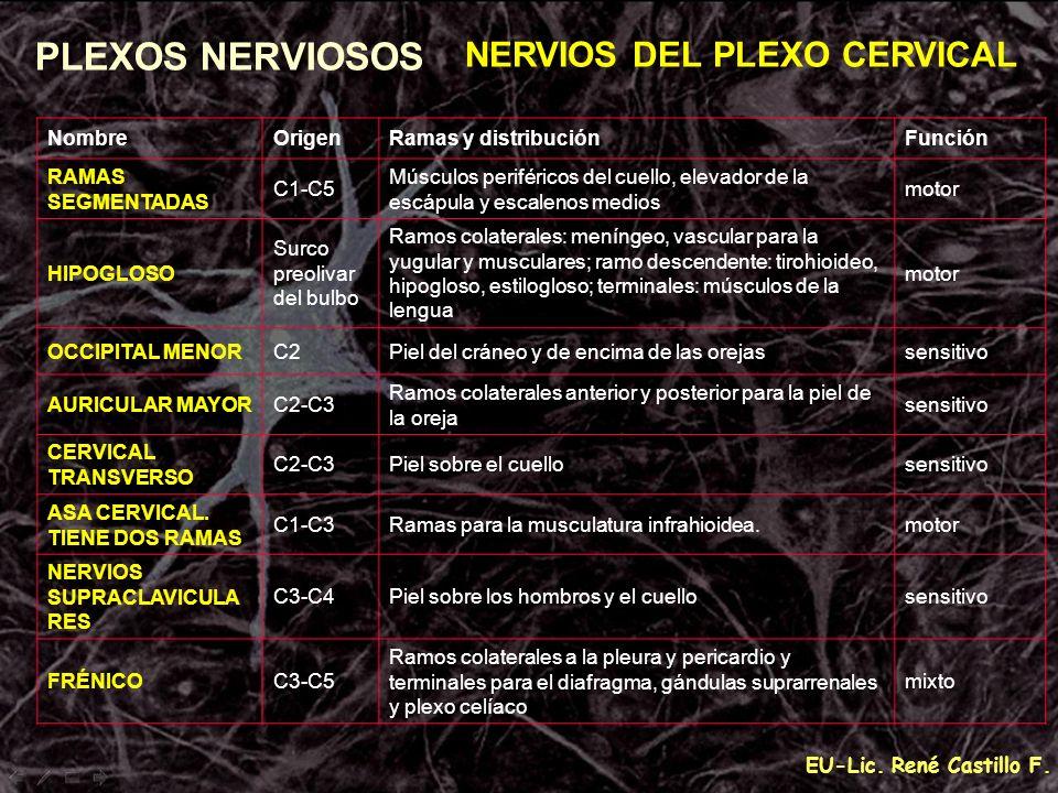 PLEXOS NERVIOSOS NERVIOS DEL PLEXO CERVICAL Nombre Origen