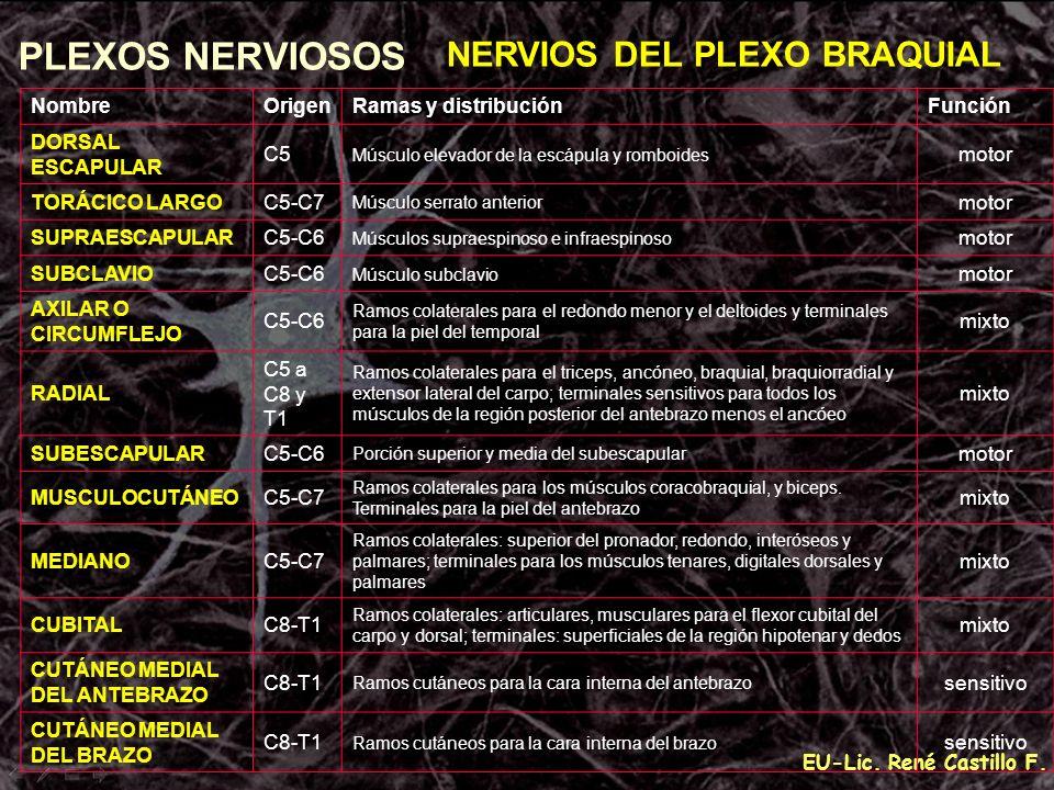 PLEXOS NERVIOSOS NERVIOS DEL PLEXO BRAQUIAL Nombre Origen