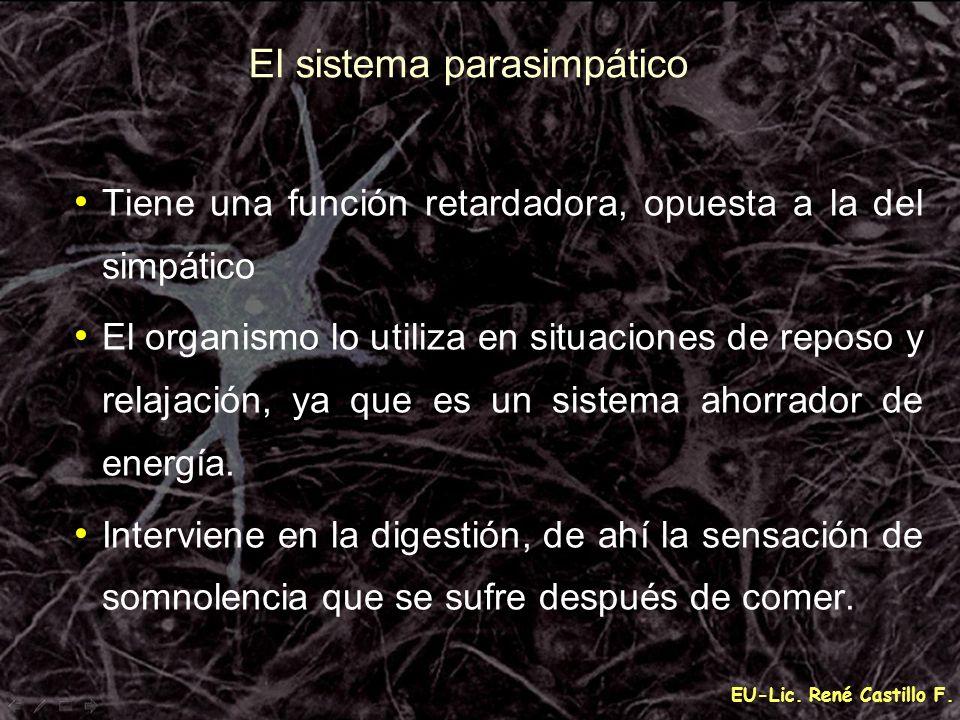 El sistema parasimpático