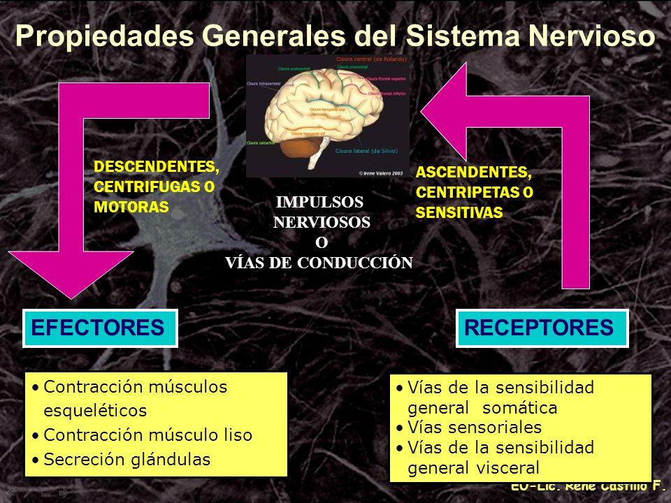 Propiedades Generales del Sistema Nervioso