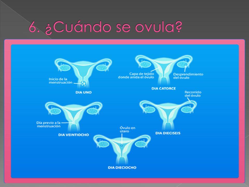 6. ¿Cuándo se ovula