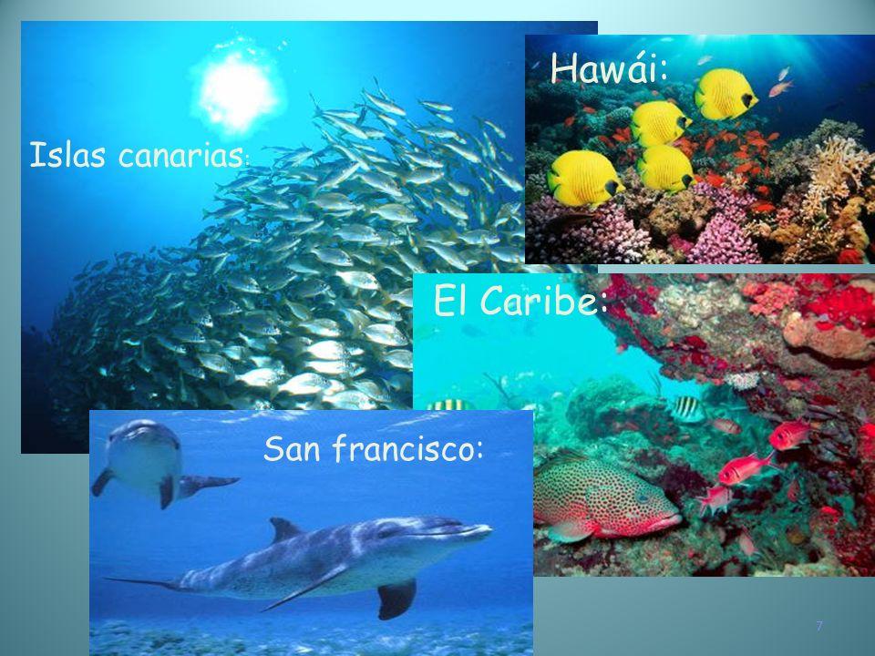 Hawái: Islas canarias: El Caribe: San francisco: