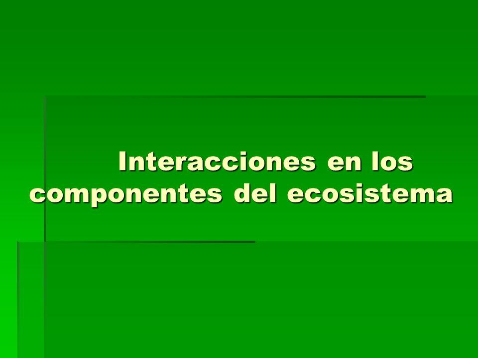 Interacciones en los componentes del ecosistema