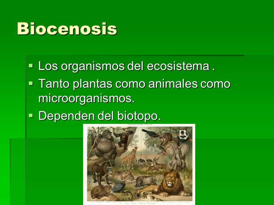 Biocenosis Los organismos del ecosistema .