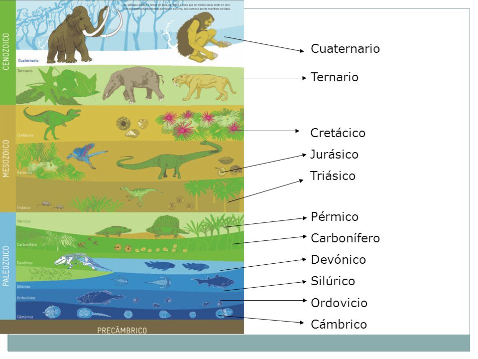 Cuaternario Ternario. Cretácico. Jurásico. Triásico. Pérmico. Carbonífero. Devónico. Silúrico.