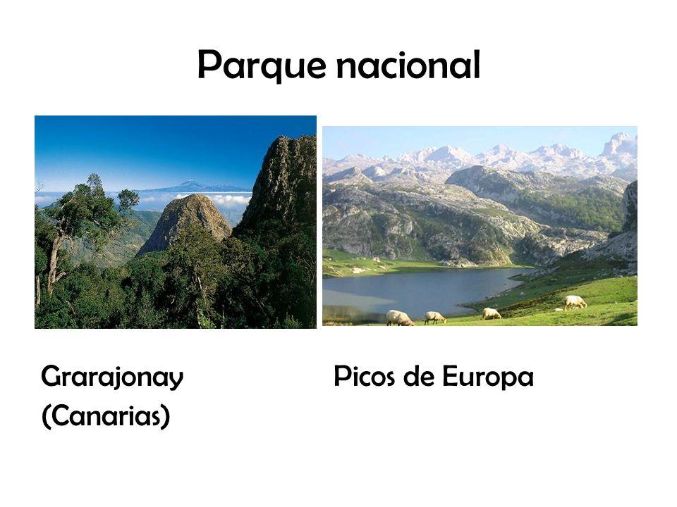 Parque nacional Grarajonay Picos de Europa (Canarias)