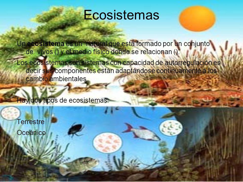 Ecosistemas Un ecosistema es un natural que está formado por un conjunto de vivos () y el medio físico donde se relacionan ().