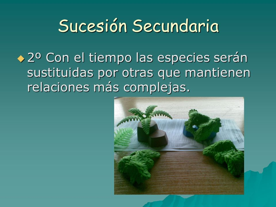 Sucesión Secundaria2º Con el tiempo las especies serán sustituidas por otras que mantienen relaciones más complejas.
