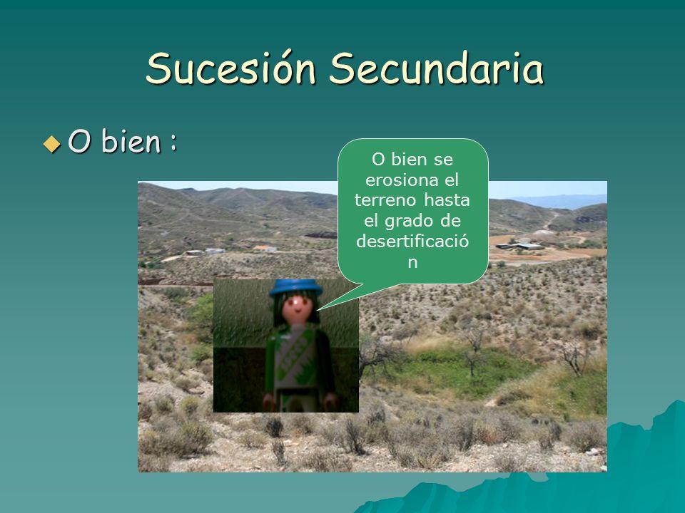 O bien se erosiona el terreno hasta el grado de desertificación