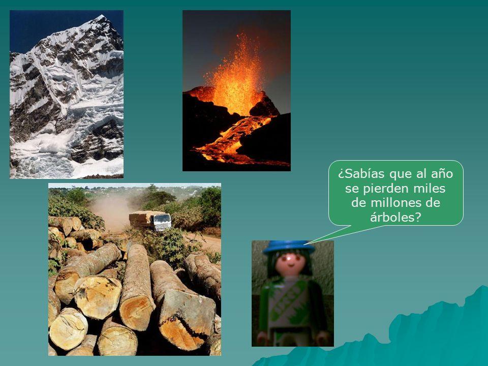 ¿Sabías que al año se pierden miles de millones de árboles