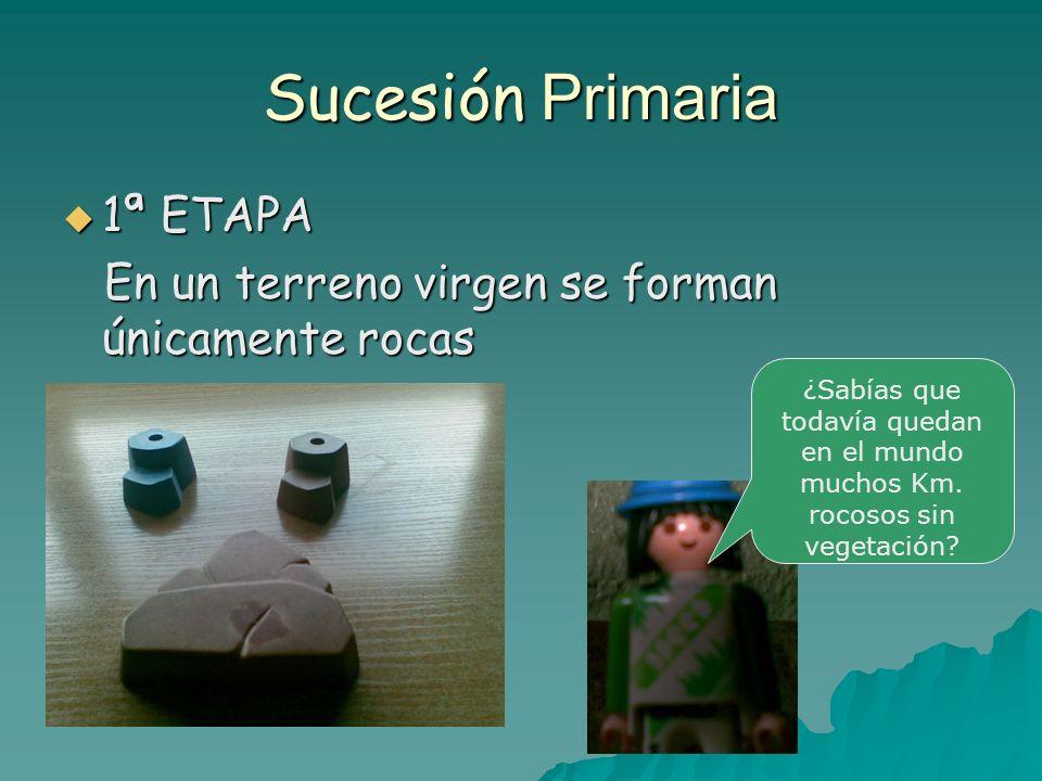 Sucesión Primaria 1ª ETAPA