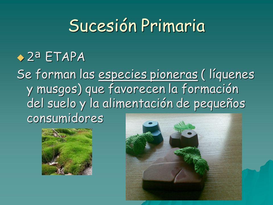 Sucesión Primaria 2ª ETAPA