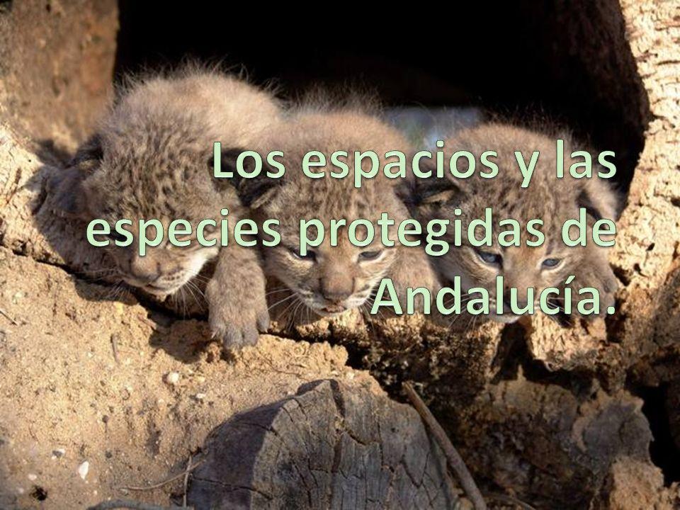 Los espacios y las especies protegidas de Andalucía.