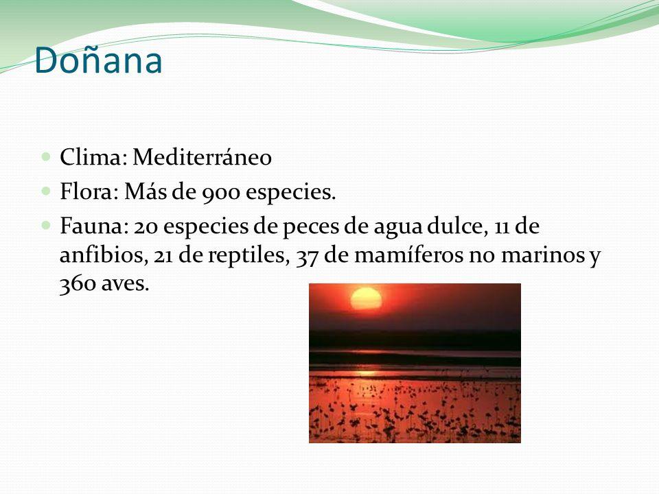 Doñana Clima: Mediterráneo Flora: Más de 900 especies.