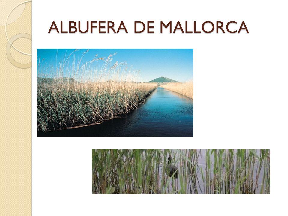 ALBUFERA DE MALLORCA