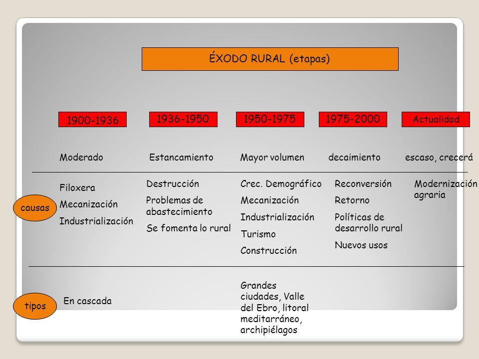 ÉXODO RURAL (etapas) 1900-1936 1936-1950 1950-1975 1975-2000