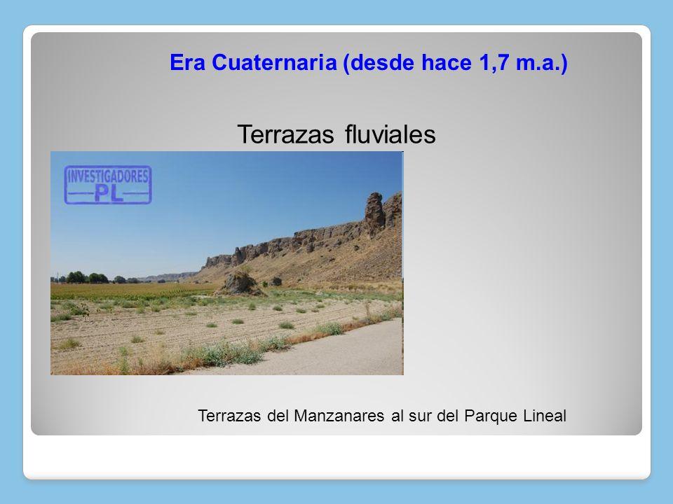 Terrazas fluviales Era Cuaternaria (desde hace 1,7 m.a.)
