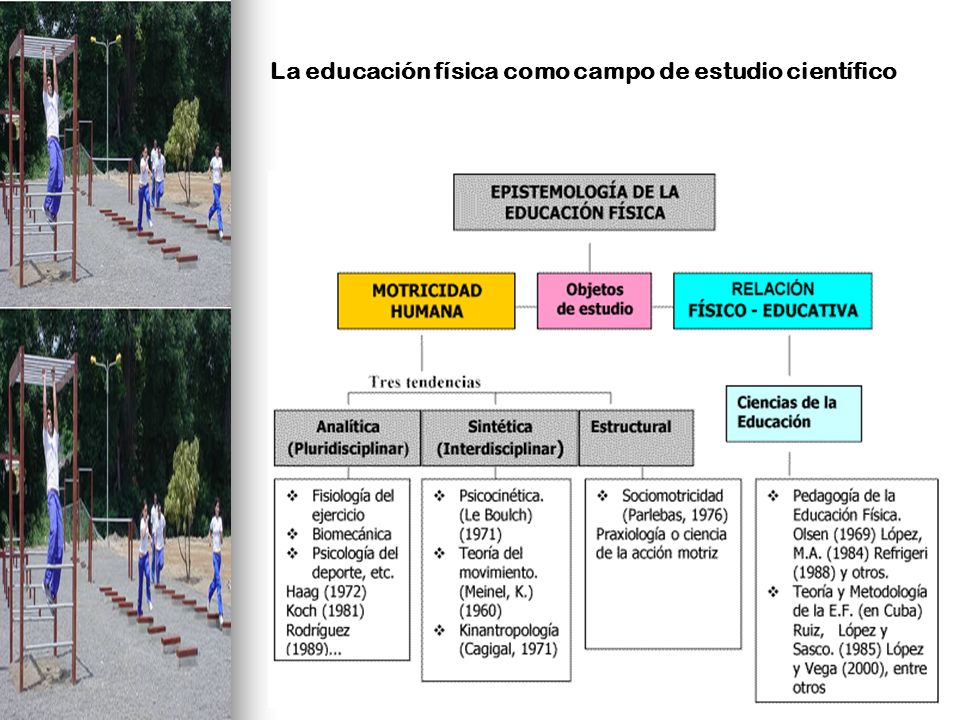 La educación física como campo de estudio científico