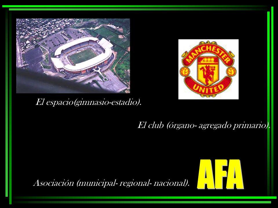 AFA El espacio(gimnasio-estadio). El club (órgano- agregado primario).