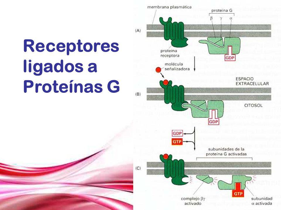 Receptores ligados a Proteínas G