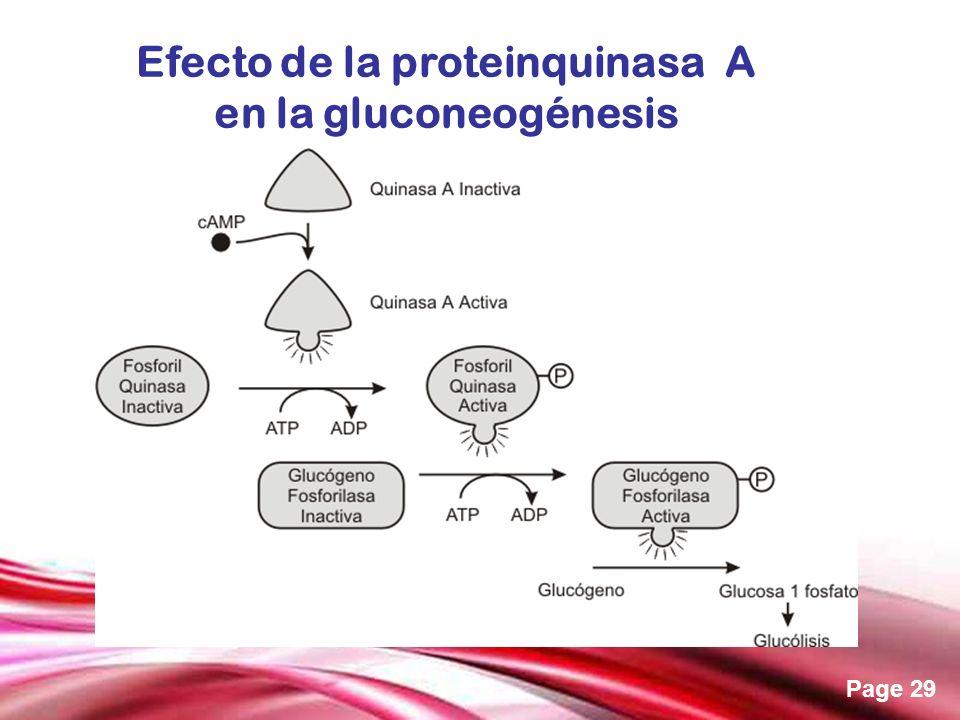 Efecto de la proteinquinasa A