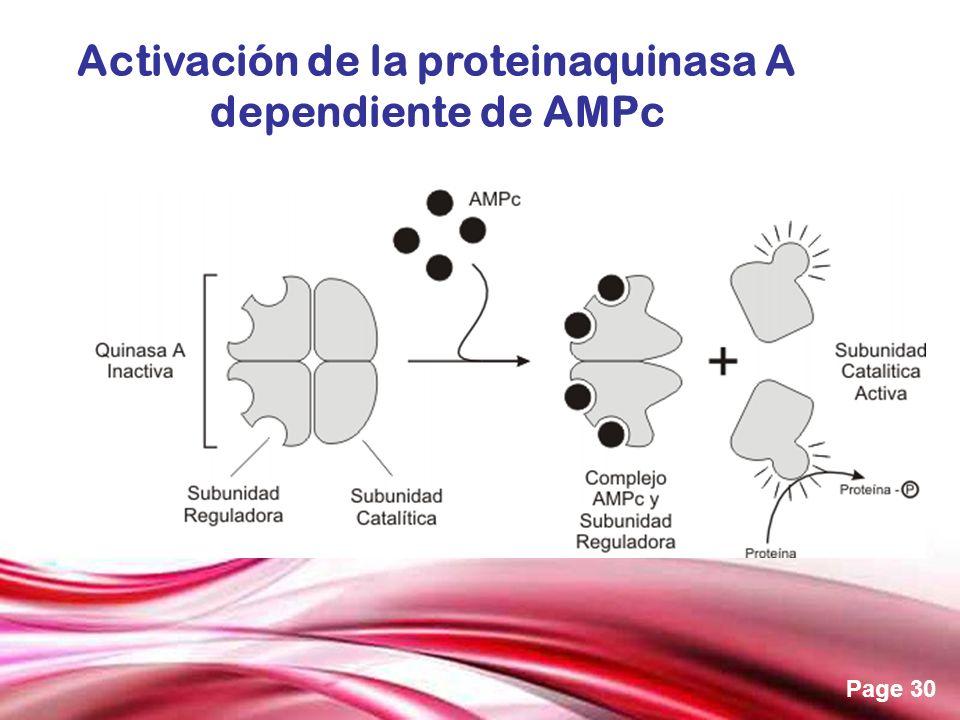 Activación de la proteinaquinasa A
