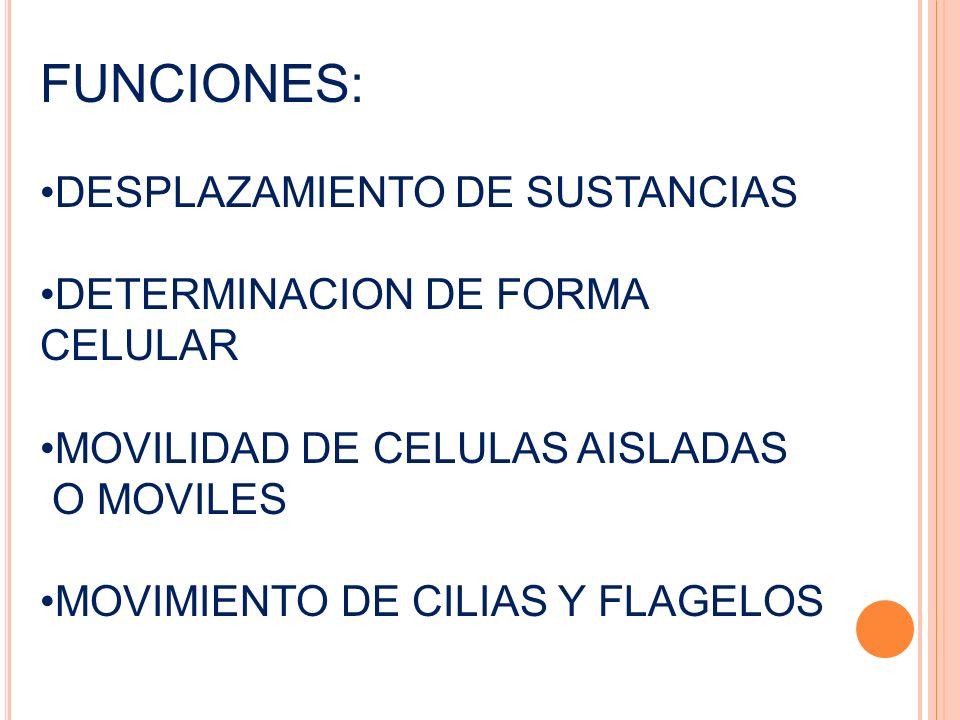 FUNCIONES: DESPLAZAMIENTO DE SUSTANCIAS DETERMINACION DE FORMA CELULAR
