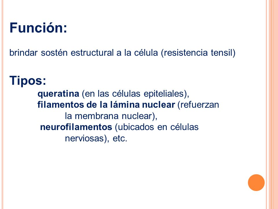 Función: brindar sostén estructural a la célula (resistencia tensil) Tipos: queratina (en las células epiteliales),