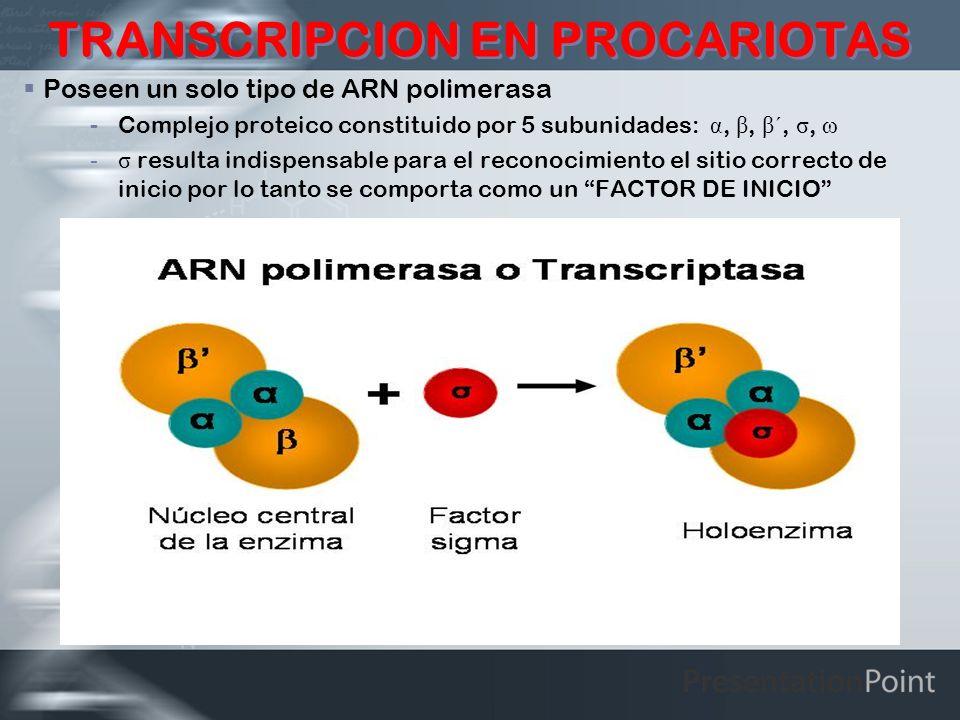 TRANSCRIPCION EN PROCARIOTAS