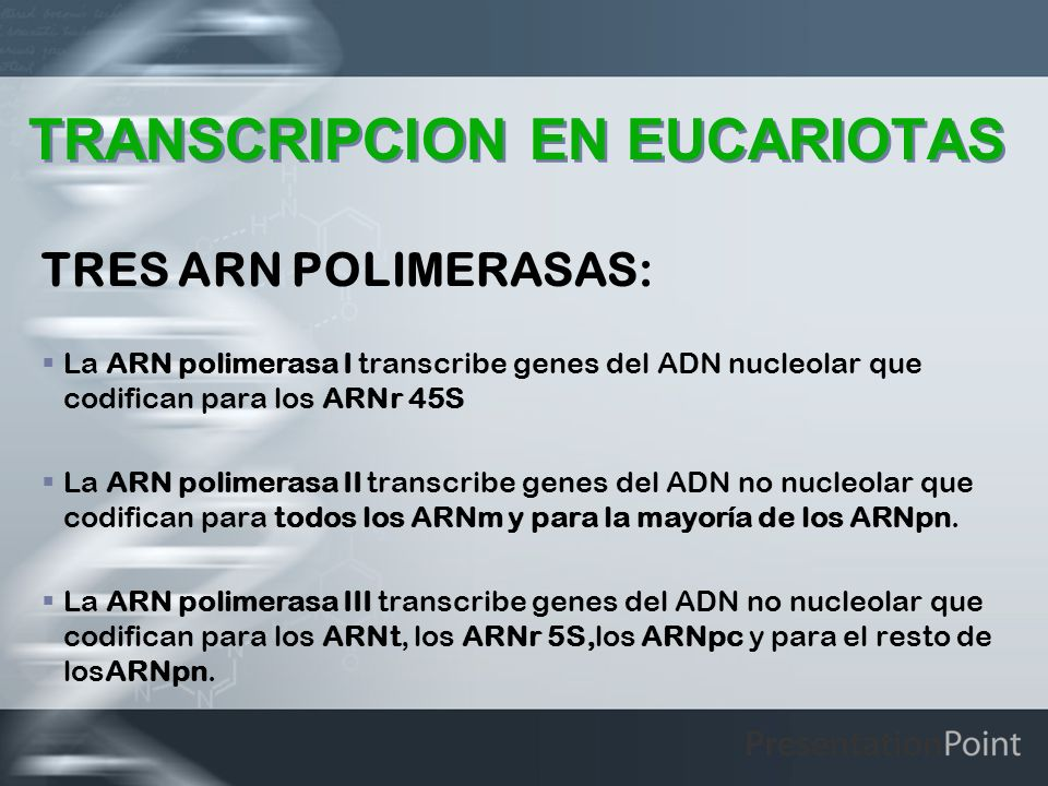 TRANSCRIPCION EN EUCARIOTAS