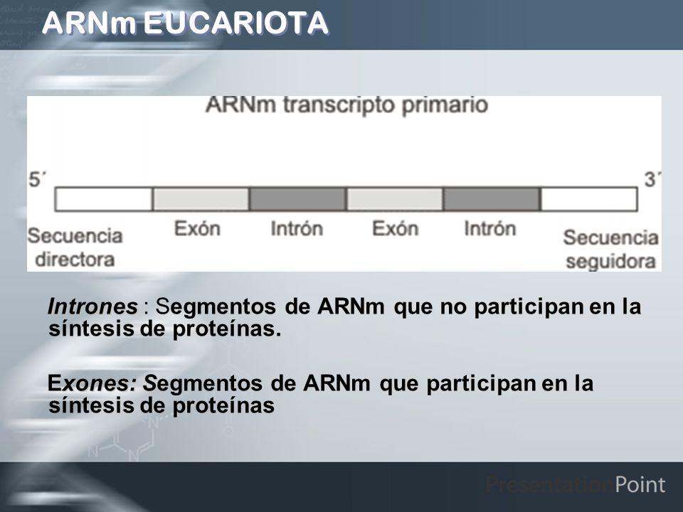 ARNm EUCARIOTA Intrones : Segmentos de ARNm que no participan en la síntesis de proteínas.