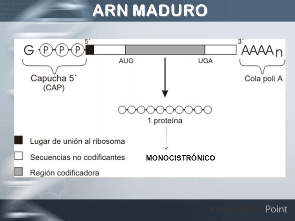 ARN MADURO MONOCISTRÓNICO