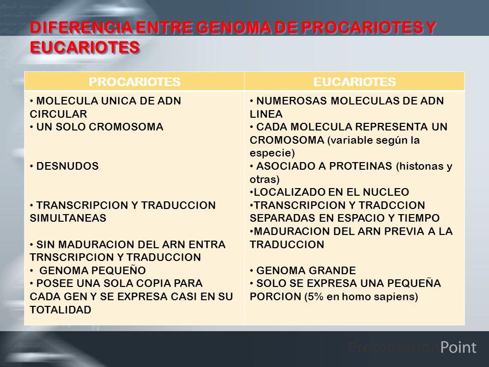 DIFERENCIA ENTRE GENOMA DE PROCARIOTES Y EUCARIOTES