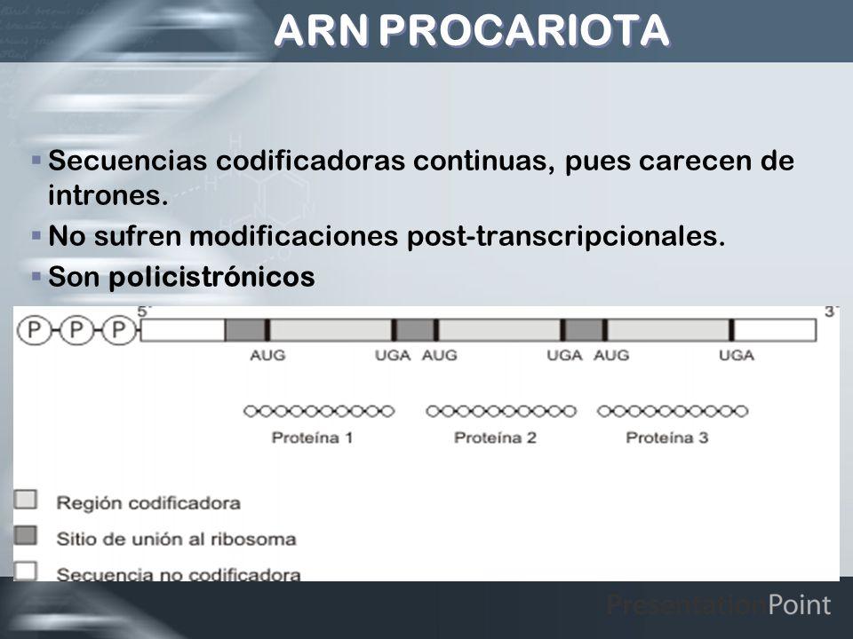 ARN PROCARIOTASecuencias codificadoras continuas, pues carecen de intrones. No sufren modificaciones post-transcripcionales.
