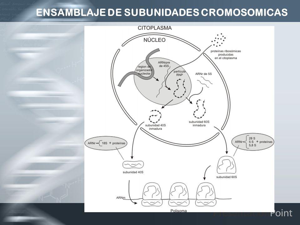 ENSAMBLAJE DE SUBUNIDADES CROMOSOMICAS