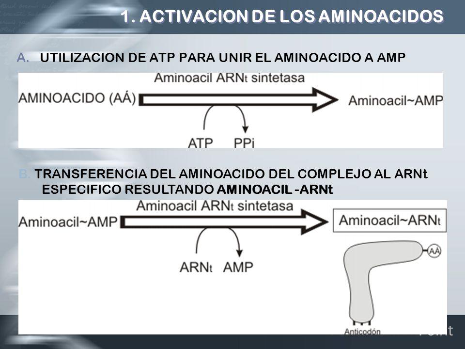 1. ACTIVACION DE LOS AMINOACIDOS