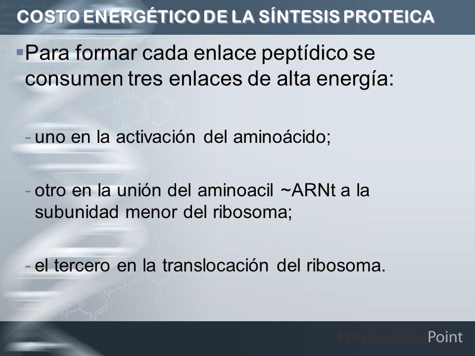 COSTO ENERGÉTICO DE LA SÍNTESIS PROTEICA