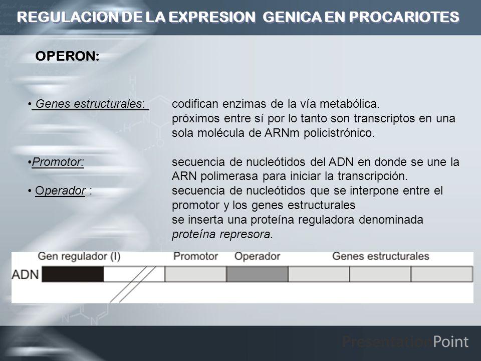 REGULACION DE LA EXPRESION GENICA EN PROCARIOTES