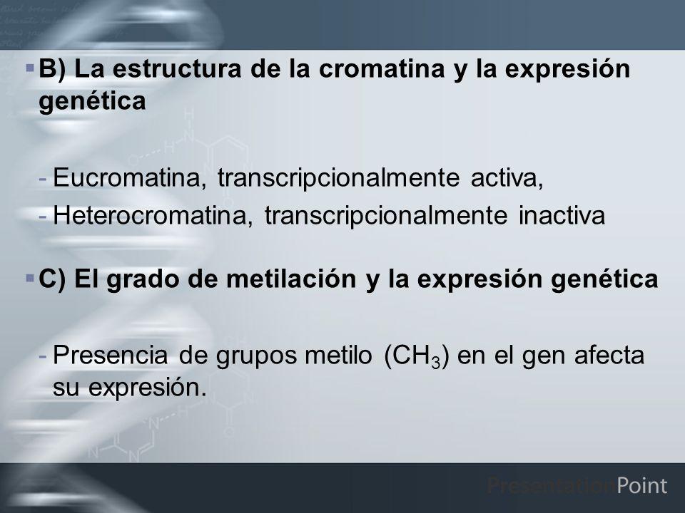 B) La estructura de la cromatina y la expresión genética