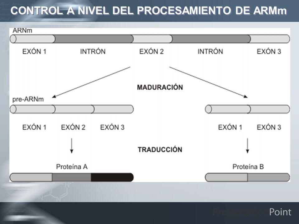 CONTROL A NIVEL DEL PROCESAMIENTO DE ARMm