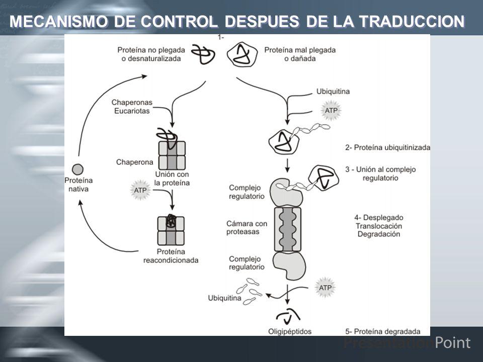 MECANISMO DE CONTROL DESPUES DE LA TRADUCCION