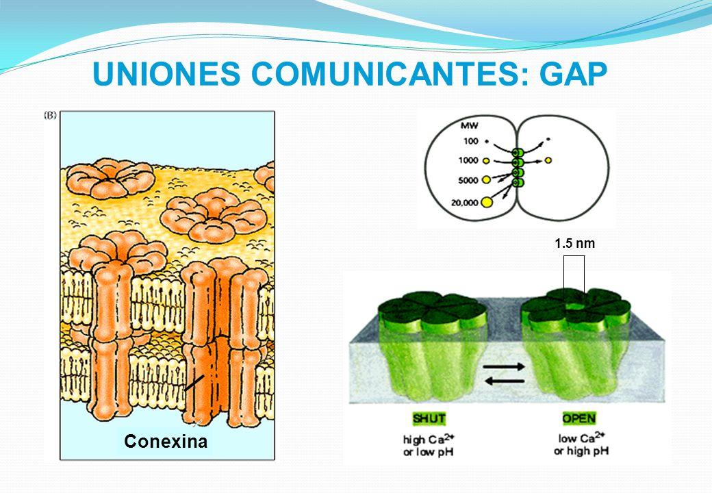 UNIONES COMUNICANTES: GAP
