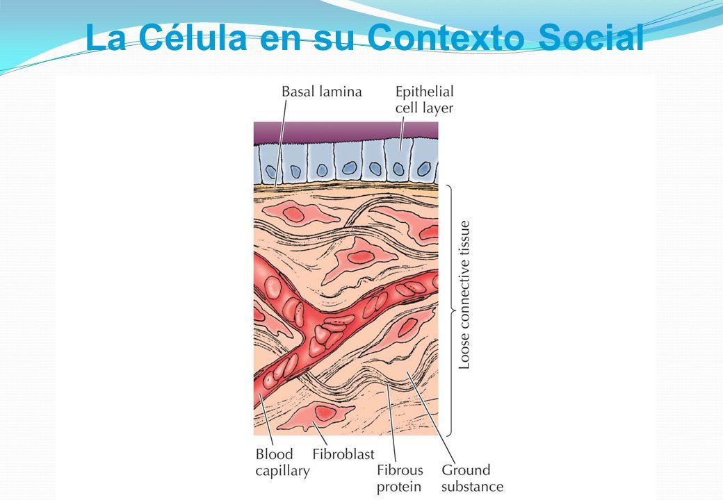 La Célula en su Contexto Social