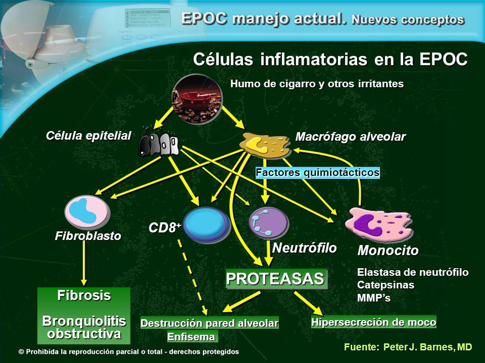 Células inflamatorias en la EPOC
