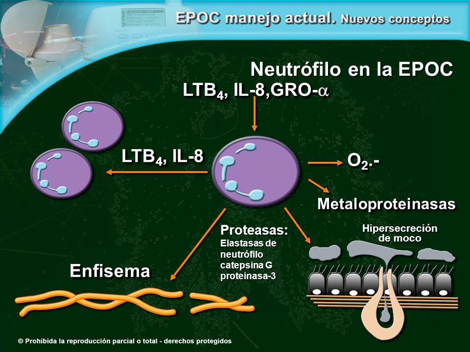 Neutrófilo en la EPOC LTB4, IL-8,GRO- LTB4, IL-8 O2.- Enfisema